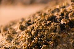 Текстура на старом камне Стоковая Фотография