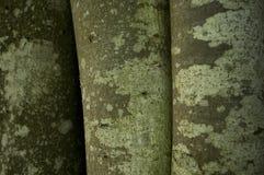 Текстура на стволах дерева Стоковая Фотография