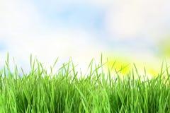 текстура неба и предпосылка поля травы Стоковая Фотография RF