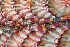 Текстура огромным striped морем креветки тигра кабеля, сложенная регулярн картина предпосылки совместно, свежие морепродукты Стоковое Изображение RF