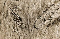 Текстура отрезанной деревянной доски Стоковое Изображение