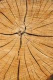 Текстура отрезка древесины стоковая фотография rf