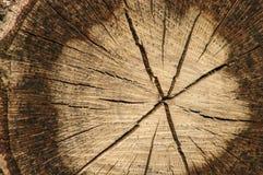 Текстура отрезка древесины стоковые фотографии rf