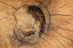 Текстура 7865 - отрезок деревянных журналов Стоковое Фото