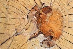 Текстура 9529 - отрезок деревянных журналов Стоковые Изображения