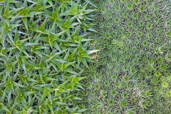 Текстура от кактуса Стоковые Изображения RF