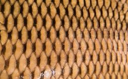 Текстура одичалой кожи карпа Стоковое Фото
