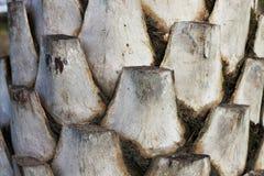 Текстура пальмы Стоковая Фотография