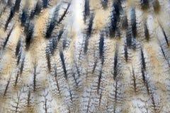 Текстура пера сыча Стоковое Изображение RF