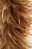 текстура пера цыпленка Стоковое Фото