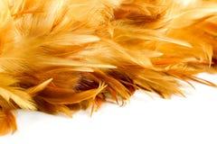 Текстура пера цыпленка Стоковое Изображение RF