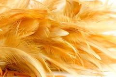 Текстура пера цыпленка Стоковое фото RF
