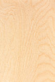 Текстура переклейки березы Стоковое Фото