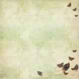 текстура пер бабочек птицы флористическая Стоковые Изображения RF