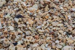 Текстура песка моря сделанная частей раковины и камня Стоковое Изображение