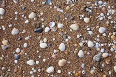 Текстура песка пляжа моря с раковинами Стоковые Изображения RF