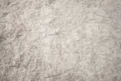Текстура песка пляжа с листьями сосны Стоковые Изображения