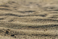 Текстура песка реки в лете на солнечный день в пустыне Стоковые Изображения