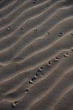 Текстура песка с следами Брайн и graty песок Развевали backgriund песка Предпосылка пляжа или песка пустыни Стоковые Изображения RF