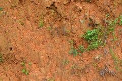 Текстура 3686 - песочная земля Стоковые Фото