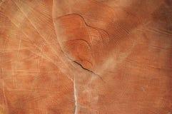 Текстура пня вала Стоковые Изображения