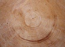 Текстура пня вала Стоковая Фотография RF