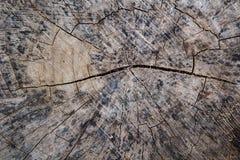 Текстура пня Стоковая Фотография RF