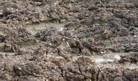 Текстура почвы Стоковое Изображение