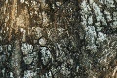 Текстура пользы расшивы деревянной как естественная предпосылка Стоковое Изображение RF