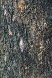 Текстура пользы расшивы деревянной как естественная предпосылка Стоковая Фотография