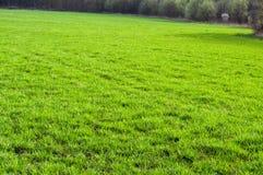 Текстура поля зеленой травы Стоковое Изображение