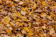 Текстура, предпосылка или картина Желтые кленовые листы осени на земле Оранжевая листва Октябрь или ноябрь environment стоковые фотографии rf