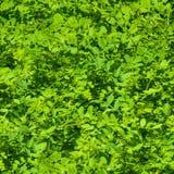Текстура, предпосылка, картина безшовная текстура изгородь Загородка o Стоковые Фотографии RF