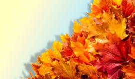 Текстура, предпосылка, картина падение Канады осени выходит клен Предпосылка  Стоковые Изображения RF