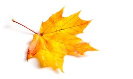 Текстура, предпосылка, картина падение Канады осени выходит клен Предпосылка  Стоковые Изображения