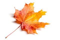 Текстура, предпосылка, картина падение Канады осени выходит клен Предпосылка  Стоковые Фотографии RF