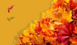 Текстура, предпосылка, картина падение Канады осени выходит клен Предпосылка  Стоковое Изображение