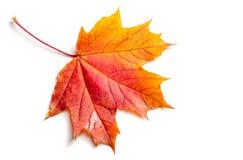 Текстура, предпосылка, картина падение Канады осени выходит клен Предпосылка  Стоковые Фото