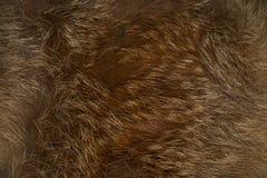 Текстура, предпосылка от продукта меха от красной лисы стоковая фотография
