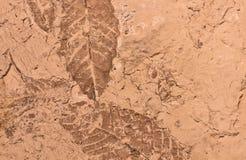 Текстура предпосылки ископаемых листьев Стоковая Фотография RF