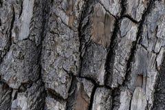 Текстура предпосылки коры дерева стоковое изображение rf