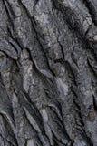 Текстура предпосылки коры дерева стоковое изображение