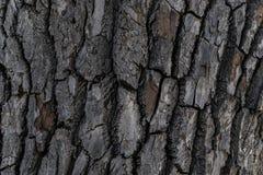Текстура предпосылки коры дерева стоковые изображения rf