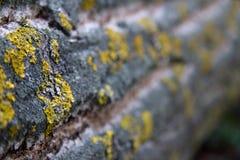 Текстура предпосылки коры дерева Применять обложку к коре дерева которое следует трескать стоковое изображение rf
