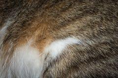 Текстура предпосылки меха кота Стоковое Изображение RF