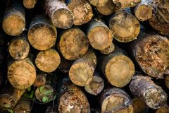 Текстура предпосылки прерванной древесины вносит в журнал вокруг треснутого сухого заготовки сложенный в привратнике стоковая фотография rf