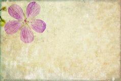 текстура предпосылки симпатичная Стоковые Фото
