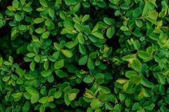 Текстура предпосылки суккулентного зеленого растения Стоковые Фото