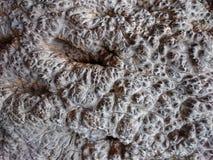 Текстура предпосылки утеса лавы Брайна Стена или земля клинкера ржавые Стоковое Изображение RF