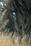 Текстура предпосылки ветви осени Стоковая Фотография